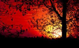 Tree Silhouette at Sunset. Tree silhouette in a hot summer sunset Royalty Free Stock Photography