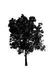 Tree silhouette isolate on white Royalty Free Stock Photography