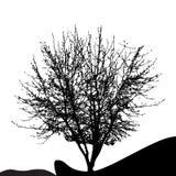 Tree Silhouette Isolated on White Backgorund. Vecrtor Illustrati Stock Photography