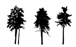 Tree Silhouette Isolated on White Backgorund. Vecrtor Illustrati Royalty Free Stock Image
