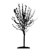 Tall Tree White Stock Illustrations, Vectors, & Clipart – (338 Stock ...
