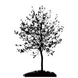 Tree Silhouette Isolated on White Backgorund. Stock Image