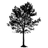 Tree Silhouette Isolated on White Backgorund. Royalty Free Stock Photo