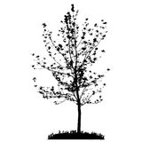 Tree Silhouette Isolated on White Backgorund. Royalty Free Stock Photos