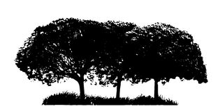 Tree Silhouette Isolated on White Backgorund. Stock Photography