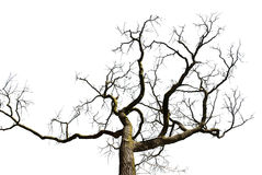 Tree silhouette isolated Stock Photo