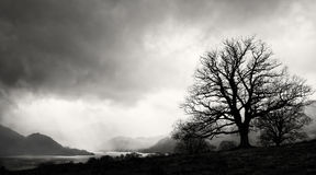 Tree Silhouette, Lake District, England Stock Photography