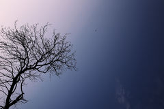 Tree, Silhouette, Leafless Branch Royalty Free Stock Image
