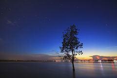 The Tree silhouette leaning over lake in Surin stock image
