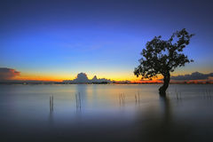 The Tree silhouette leaning over lake in Surin stock photo
