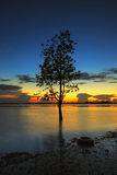 The Tree silhouette leaning over lake in Surin royalty free stock image