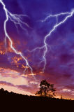 Tree silhouette and  lightning. Tree silhouette at sunset under dramatic sky with lightning Stock Image