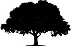 Hand Drawn Oak Tree Silhouette Royalty Free Stock Photography