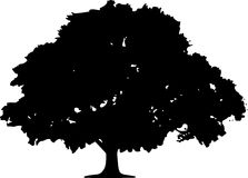 Tree Silhouette Sketch  Stock Image