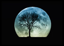 Tree silhouette and the Moon. Full Moon and tree silhouette by night Stock Photo