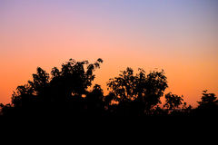 Tree silhouette with morning sky Royalty Free Stock Images