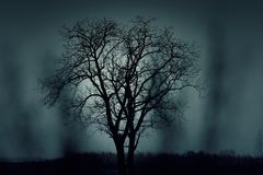 Tree, Silhouette, Mysterious Royalty Free Stock Photography