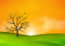 Tree silhouette in nature Stock Photography