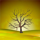 Tree silhouette in nature Stock Photos