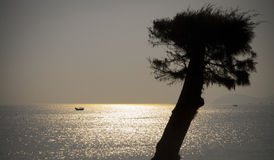 Tree silhouette Nha Trang beach, Vietnam Royalty Free Stock Photography