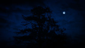 Tree Silhouette At Night With Moon. Dark tree with clouds moving past and a full moon stock footage