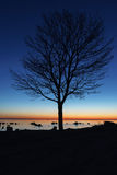 Tree silhouette by night Royalty Free Stock Images