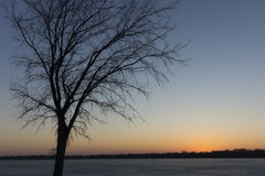 Tree Silhouette at Night. A tree silhouettes the sky on a late winter evening along the shore of a frozen lake Royalty Free Stock Photography