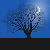 Tree silhouette and night. Night, tree, vector, illustration, nature, lights, background, silhouette, sky, blue, black, beautiful, bright, dark, peaceful Royalty Free Stock Photos