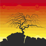 The tree silhouette. With no foliage on the cliff, the sunset and clouds Royalty Free Stock Image