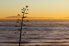 Tree Silhouette on Ocean Sunset Landscape Stock Image
