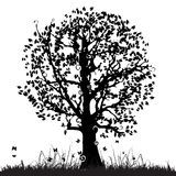 Tree silhouette old, grass Stock Photography