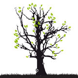 Tree silhouette old, grass Royalty Free Stock Photography