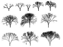 Tree silhouette outline cg Royalty Free Stock Image