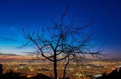 Tree silhouette over Athens Greece at night royalty free stock photography
