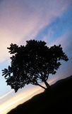 Tree silhouette over beautiful sunset Royalty Free Stock Photos