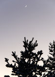 Tree silhouette over winter sky and moon cold.  stock photo
