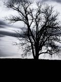 tree in silhouette on an overcast evening Stock Images