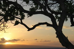 Tree Silhouette. A tree silhouette with a peaceful sunset in the background royalty free stock images