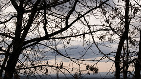 Tree silhouette. This photo was taken in Portugal, near the highest mountain stock photo