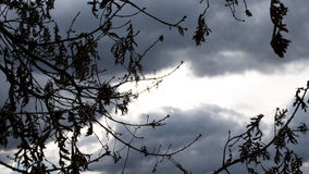 Tree silhouette. This photo was taken in Portugal, near the highest mountain Stock Photography