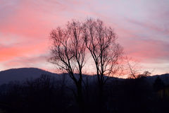 Tree silhouette on pink sky at sunset. In springtime Royalty Free Stock Photos