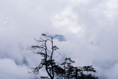 Tree silhouette and rain over forest mountains. Royalty Free Stock Photos