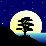 Tree. Royalty Free Stock Photo