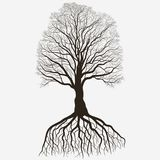 Tree Silhouette with root system . Black bare oak outline. Detailed image. Vector. Tree with root system Silhouette on white background, Black brown oak outline vector illustration