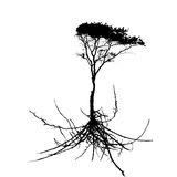 Tree Silhouette with root system Isolated on White Background. V Stock Photography