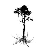 Tree Silhouette with root system Isolated on White Background. V Stock Photos