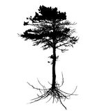 Tree Silhouette with root system Isolated on White Background. V Stock Images