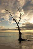 Tree silhouette on shoreline Stock Photos