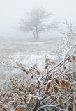 Landscape with frost and fog stock image