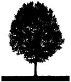 Tree Silhouette Sketch Stock Photos